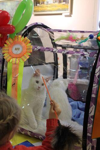 """Международная выставка кошек AFC """"Удивительные лесные кошки"""", 1 марта 2014 г. Сургут - Страница 2 0_e49b5_de56f2c8_L"""