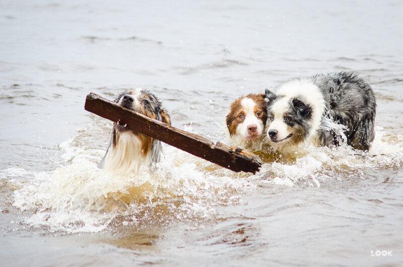 Мои собаки: Зена и Шива и их друзья весты - Страница 4 0_a03e7_d274fa88_XL