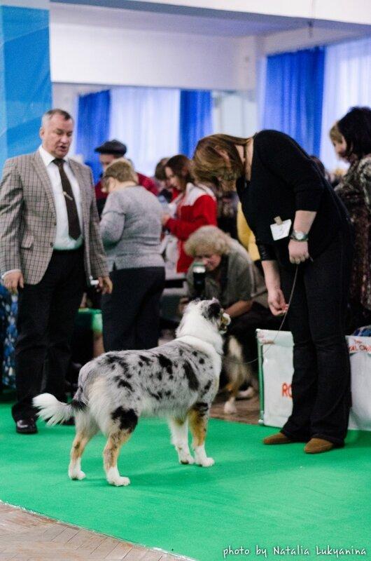 Выставочные успехи наших собак - 5 - Страница 6 0_99b3b_f75913cd_XL