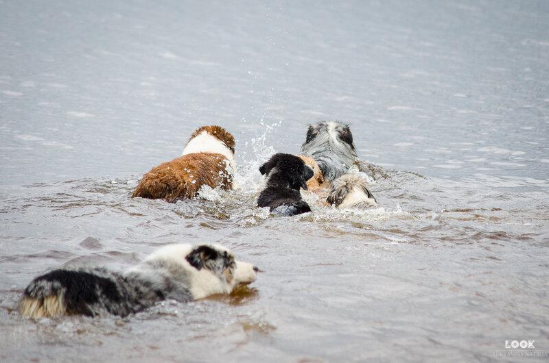 Мои собаки: Зена и Шива и их друзья весты - Страница 4 0_a03d2_b237321_XL