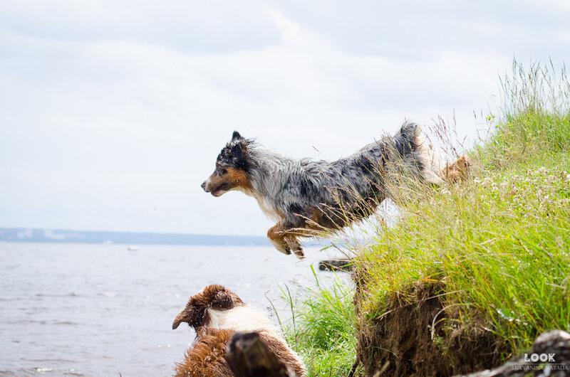 Мои собаки: Зена и Шива и их друзья весты - Страница 4 0_a03fd_c6f6399c_XL