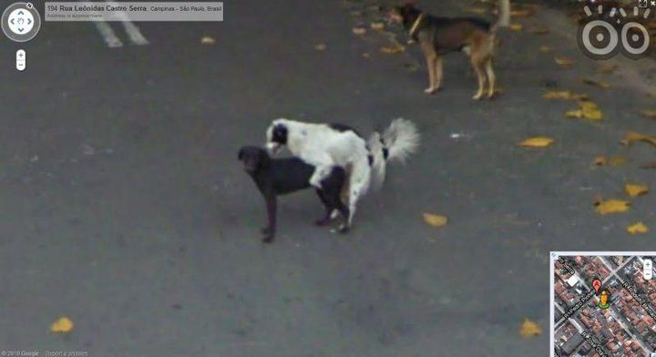 Kuriózne zábery na Google Street View  Google_street_view_pes_4