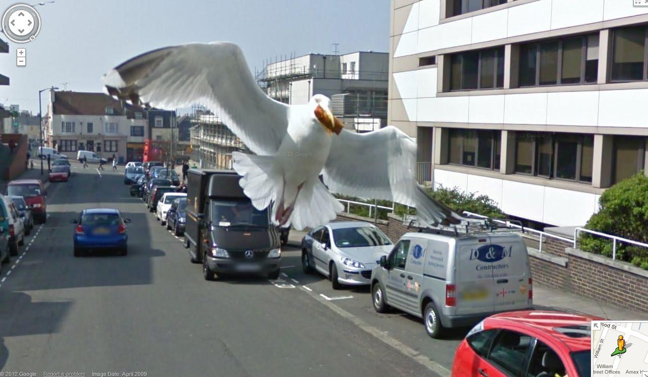 Kuriózne zábery na Google Street View  Google_street_view_vtak_4