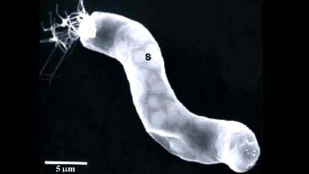 NASA: Máme dôkaz mimozemského života Nasa_fosilia_zivot