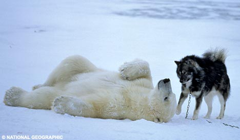 thread sull'AMICIZIA tra specie diverse PolarHuskie2NG_468x274