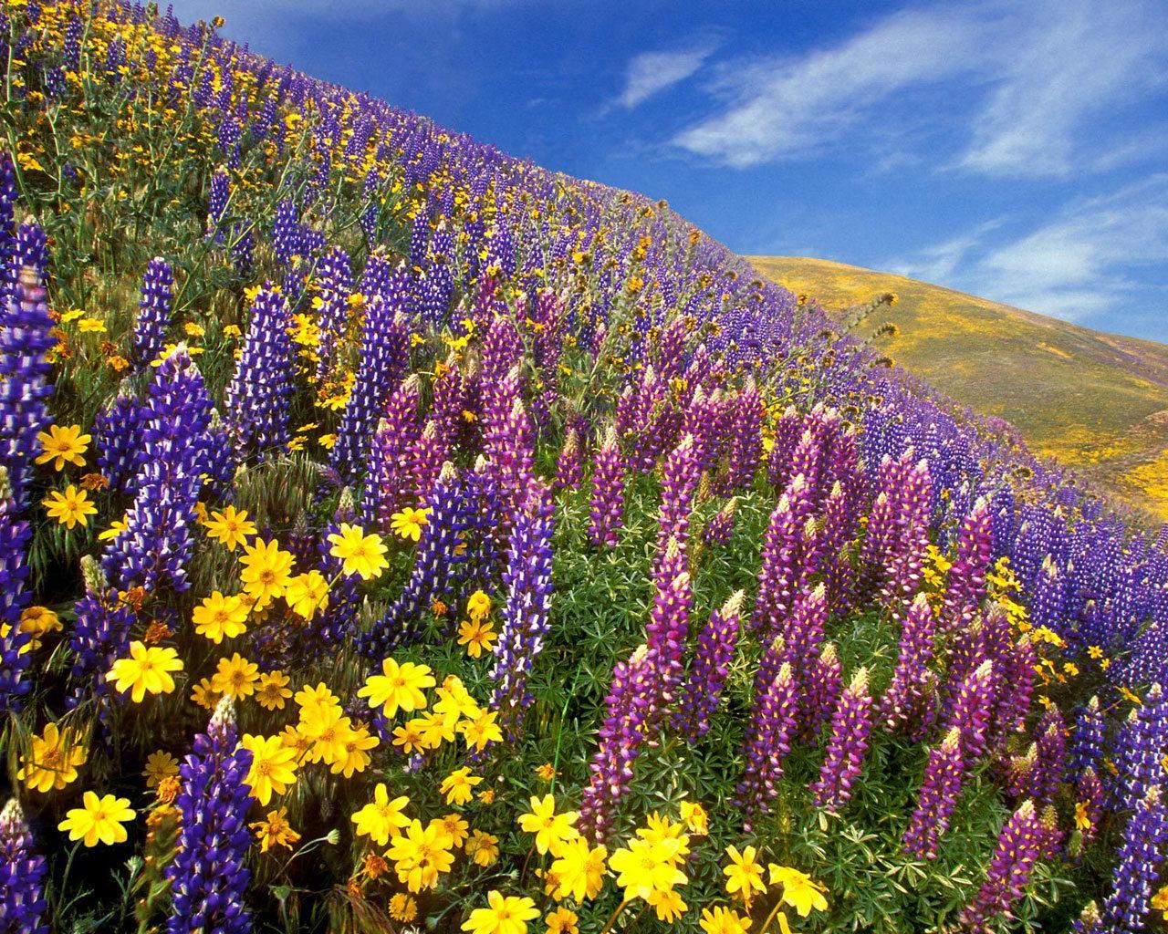 *Фуршетный столик*.  - Страница 2 Field-flowers-1280