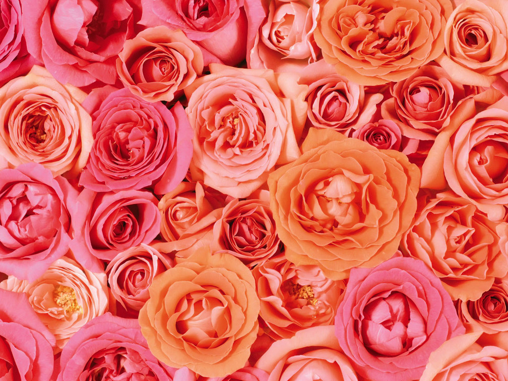 Фанфики. - Страница 5 Ro-roses-1024