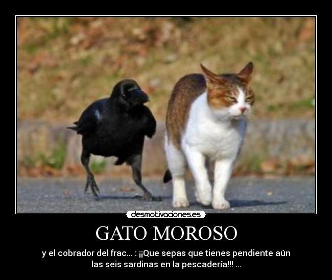 FotoMorfosis Cobrador_1
