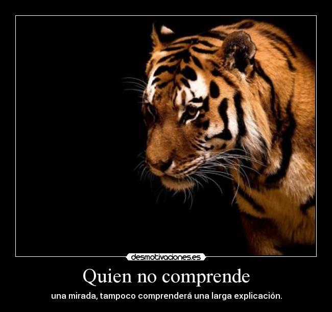 Máximas filosóficas y citas. Tigre_61024x819