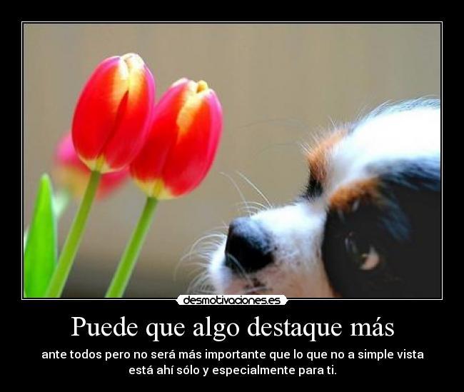 ¡¡¡¡Un tulipan para ti cada dia!!! 1026