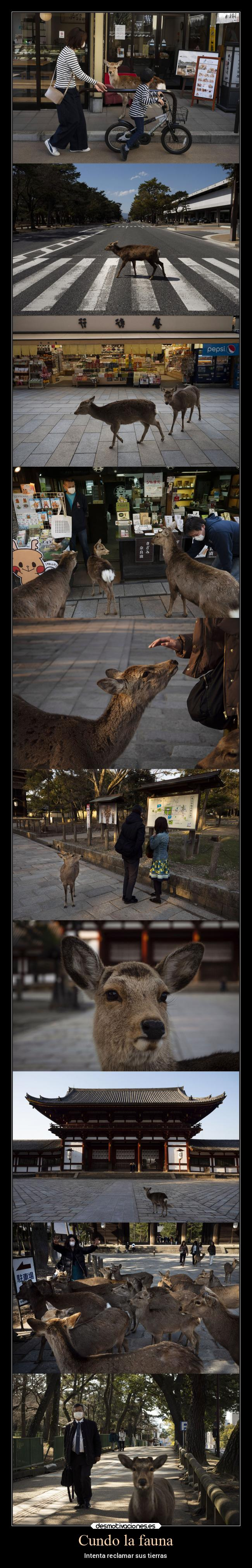 Toc Toc !!! - Página 36 Animales-reclamar-imagenes