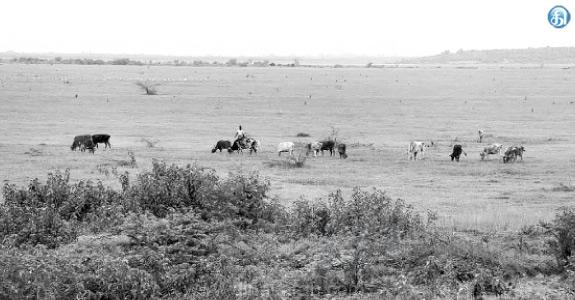 சென்னைக்கு குடிநீர் வழங்கும் ஏரிகளில் ஒன்றான பூண்டி நீர்தேக்கம்  வறண்டது: Tamil_News_0307_2020__453106105327607