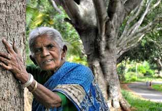 திம்மக்கா Tamil_News_large_343970