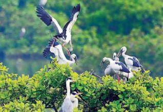 வேடந்தாங்கல் பறவைகள் சரணாலயம் இன்று திறப்பு Tamil_News_large_1876172_318_219