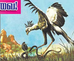 செக்ரெட்டரி பறவை பெரிய பறவை. E_1407411548