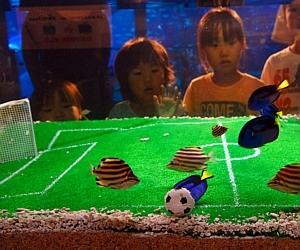 Aquário entra no clima do futebol  CopaPeixes_AFP_300