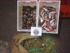 La Policía Canaria incauta 31 kilos de pescado y 9 de lapas en una playa de Puerto de la Cruz (Tenerife) Fotonoticia_20110606154528_225