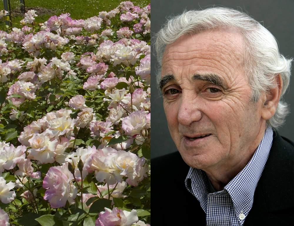 Discussion sur l' Etoile de TF1 du  15  juin   2016 - Page 3 Charles-aznavour