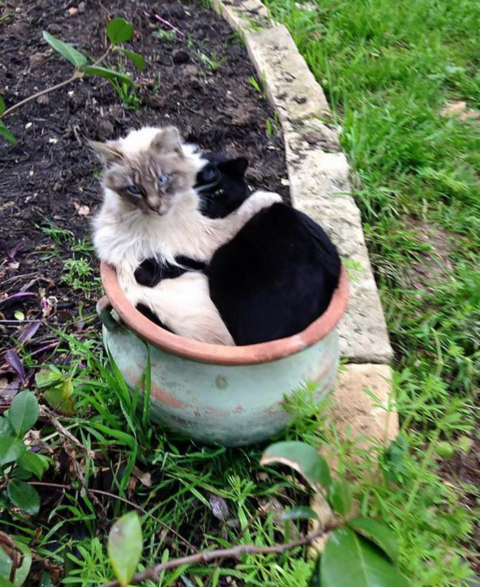коты и цветы 16