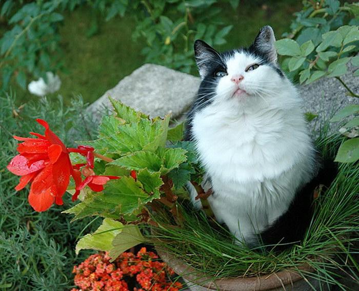 коты и цветы 20