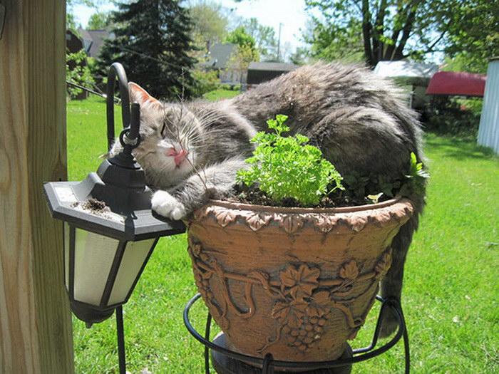 коты и цветы 22