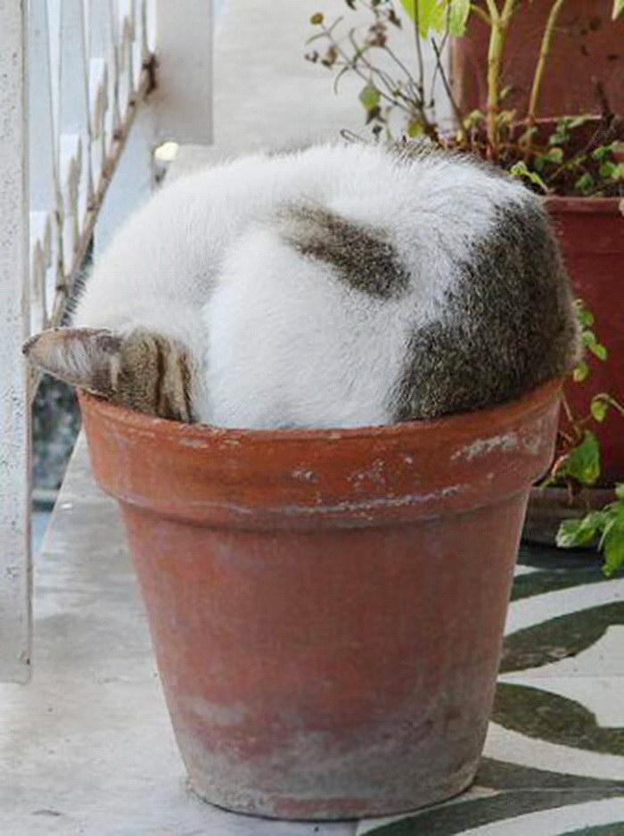 коты и цветы 23