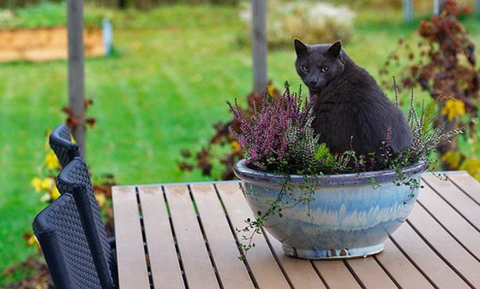 коты и цветы 29