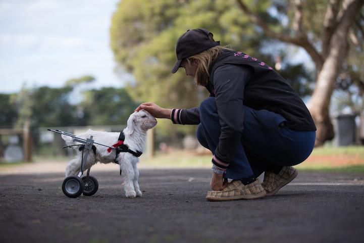 Милосердное отношение людей к животным 1