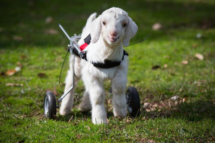 Милосердное отношение людей к животным 3