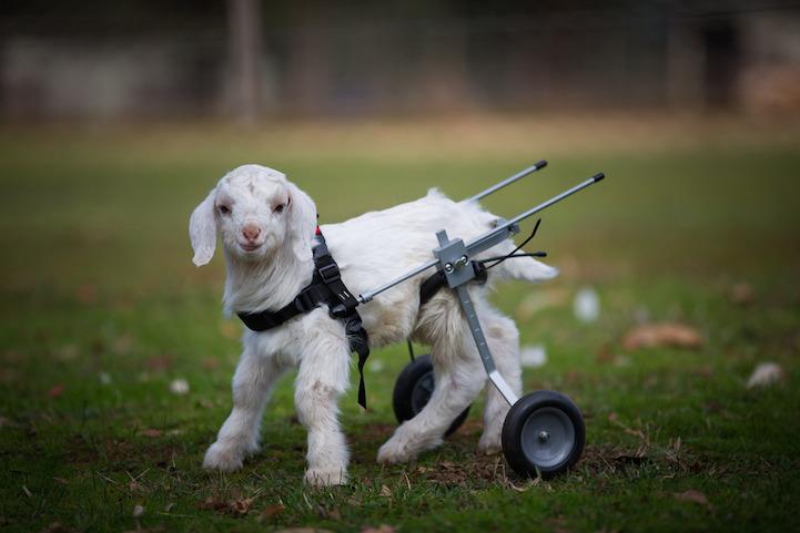 Милосердное отношение людей к животным 4