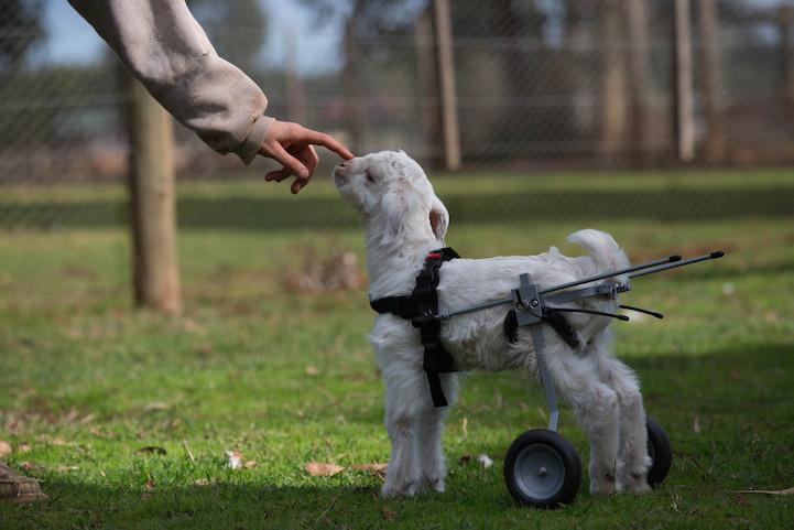 Милосердное отношение людей к животным 5