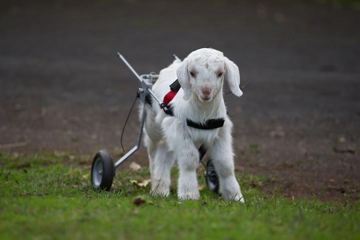 Милосердное отношение людей к животным 8