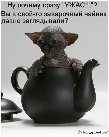 Кошачий юмор - Страница 8 016_CatVasiyaAndDog_221009_Go2LoadCOM