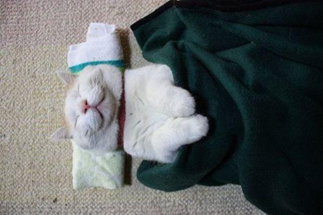 Cieľ na zajtra - Stránka 14 The_laziest_cat_640_06