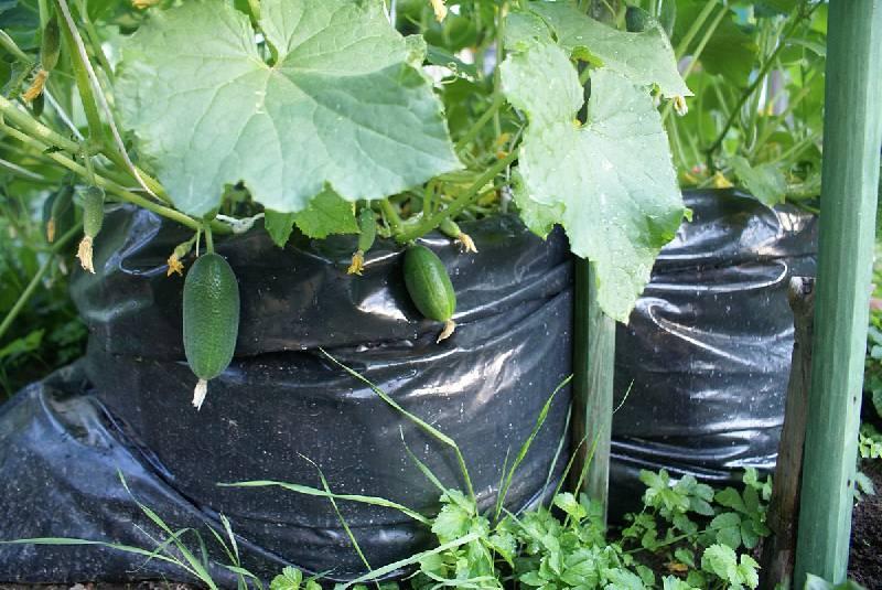Чтобы был богатым урожай 02lab5vph1293221572