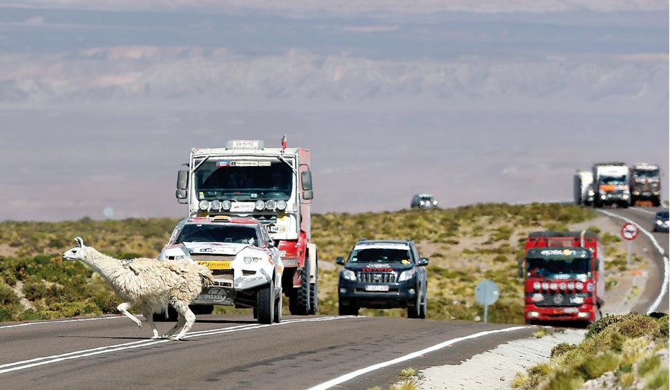 Rallye Raid Dakar Peru - Argentina - Chile 2013 [5-20 Enero] - Página 18 528892_20130111235846