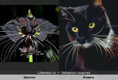Юмор на цветочную тему Cat_flower