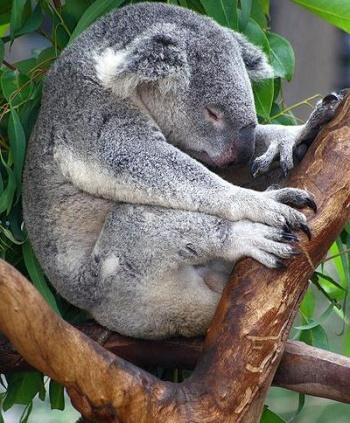I životinje odmaraju - Page 2 1303582