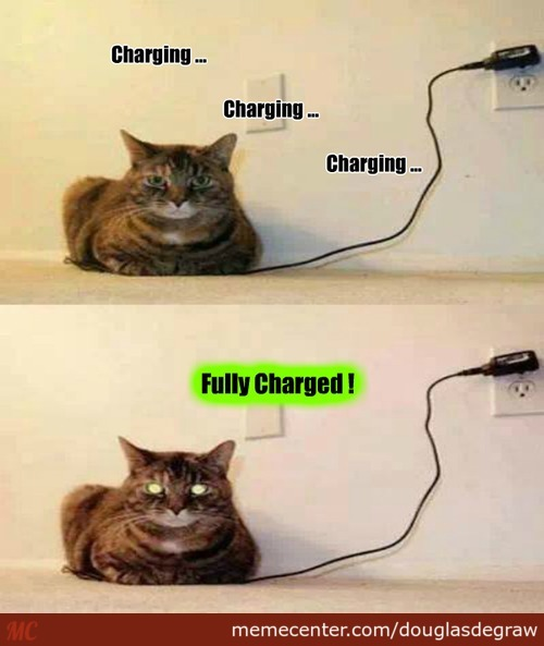 Le coin de nos 30 millions d'amis - Page 33 Charging-your-cat_c_2671631