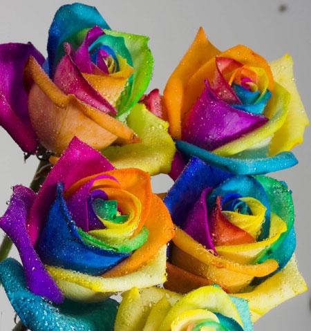 Aš noriu...? Roses_450x479