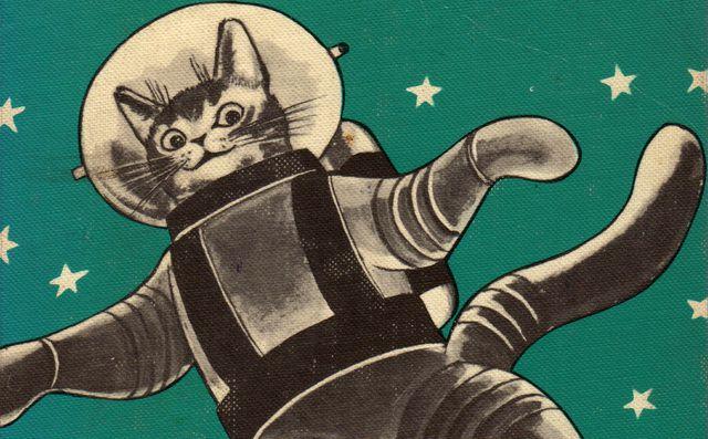 L'Iran veut envoyer un chat persan dans l'espace Ob_5304b97c54d8690fdbb4f3828144c4df_space-cat