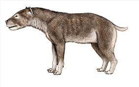 Voyage paléontologique dans le Gers Ob_3ac1b1a3afa1b145ee08690ccdbbafa6_chien-ancien