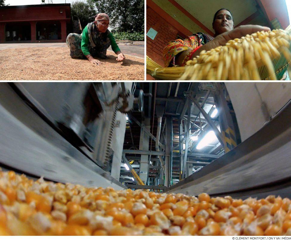 Des maisons de semences paysannes pour se libérer de l'agrobusiness Ob_b41fe5_la-guerre-des-graines1