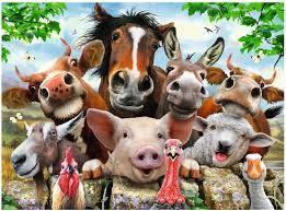 Une vie de cochon Ob_40eecf_images-9