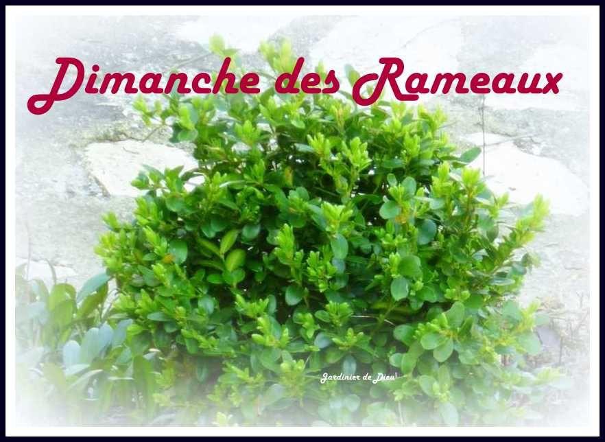 Bon Dimanche Ob_853de6_k800-buis-2