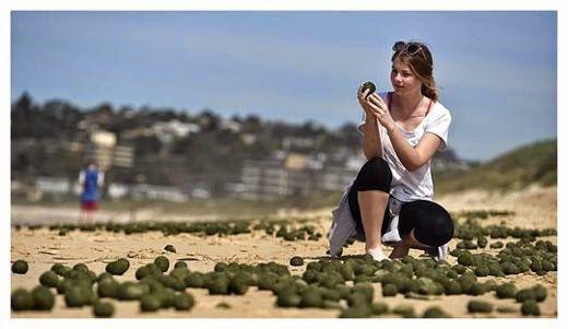 De bien mysterieux oeufs verts s'échouent sur une plage de sydney Ob_94922c_oeufs-verts-sydney