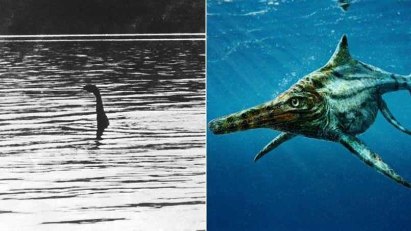 Des scientifiques ont découvert un cousin du monstre du Loch Ness Ob_77ad87_loc