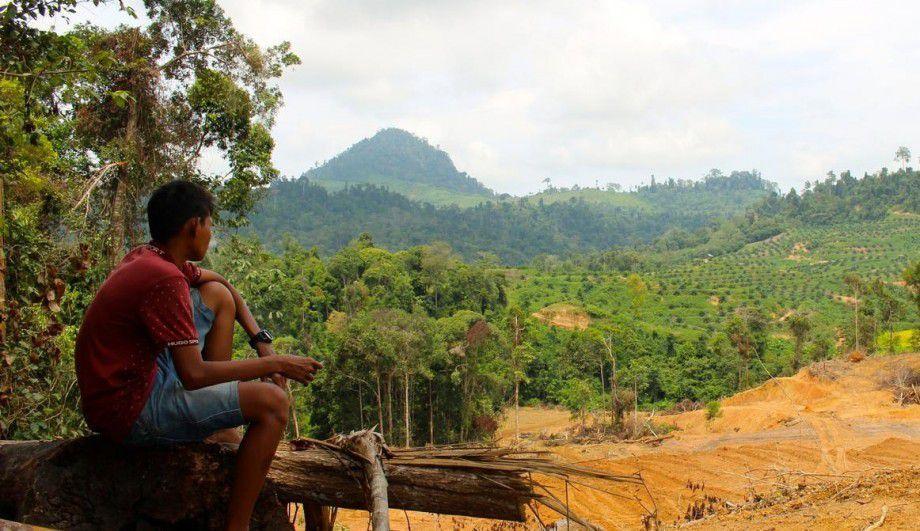 Un drone révèle le vrai visage de la déforestation en Indonésie Ob_6744a2_cleared-area-mr-e1433054879866-920x531