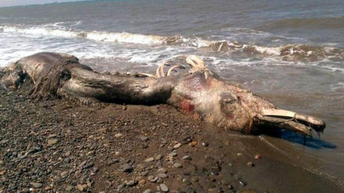 """Les restes d'un """"monstre marin"""" retrouvés sur une plage russe Ob_f182f0_cc065a35d518c0e1e85cadde62df8b11-14357"""