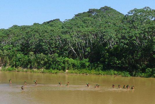 La forêt amazonienne n'absorbe plus le carbone émis par l'Homme Ob_99ac48_4596362-6-2d5e-photo-de-la-foret-amazo